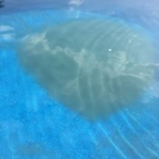 Cleaning Swimming Pool - cloudy area in pool