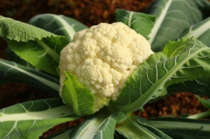 Photo of a head of cauliflower growing.