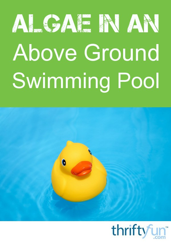 Algae in an above ground swimming pool thriftyfun for Using algaecide in swimming pool