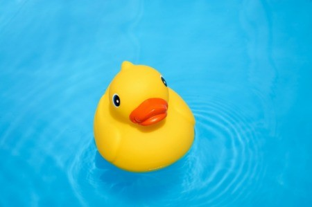 A rubber duck floating in a swimming pool.