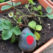 A rock painted with a red strawberry.