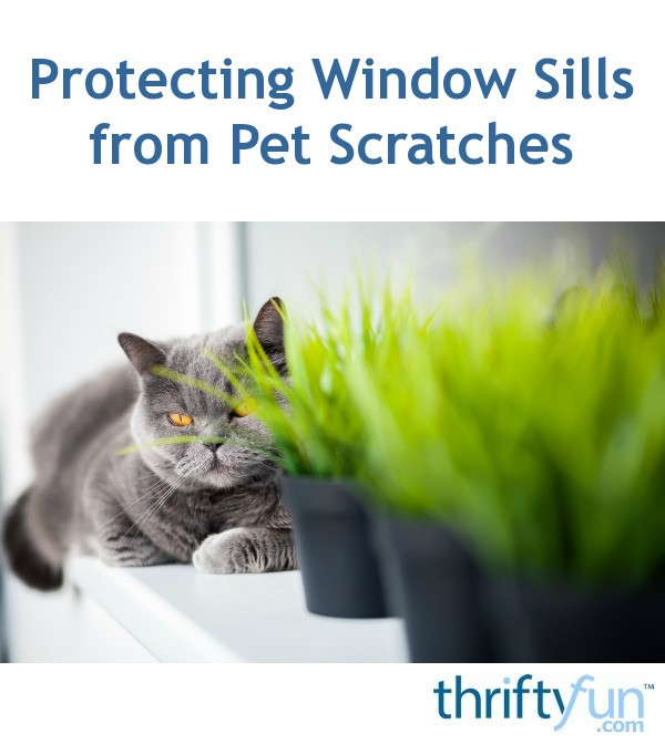 Superb Protecting Window Sills From Pet Scratches Thriftyfun Ibusinesslaw Wood Chair Design Ideas Ibusinesslaworg