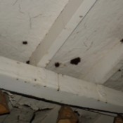Cleaning Black Prickly Stuff on Wooden Porch - black spots on ceiling of wooden porch