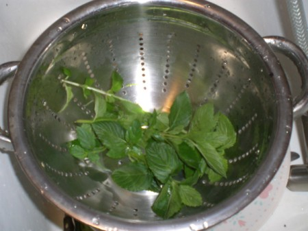 Spearmint in colander