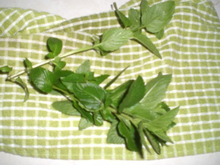 Spearmint on towel