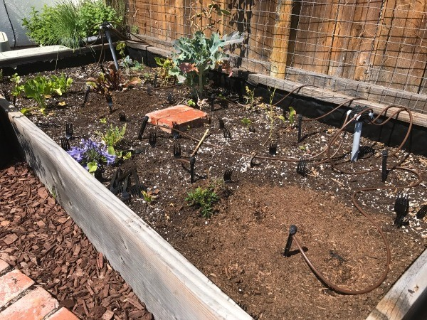 how to keep groundhogs out of my garden. Forks In The Garden To Scare Off Animals - Black Plastic Forks, Tines Up, How Keep Groundhogs Out Of My S