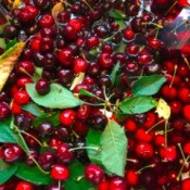 A sinkful of freshly picked cherries