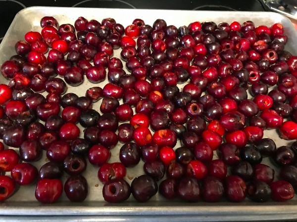 A tray of cherries, ready for the freezer.