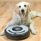 A golden retriever sitting on a wood floor with a robotic vacuum.