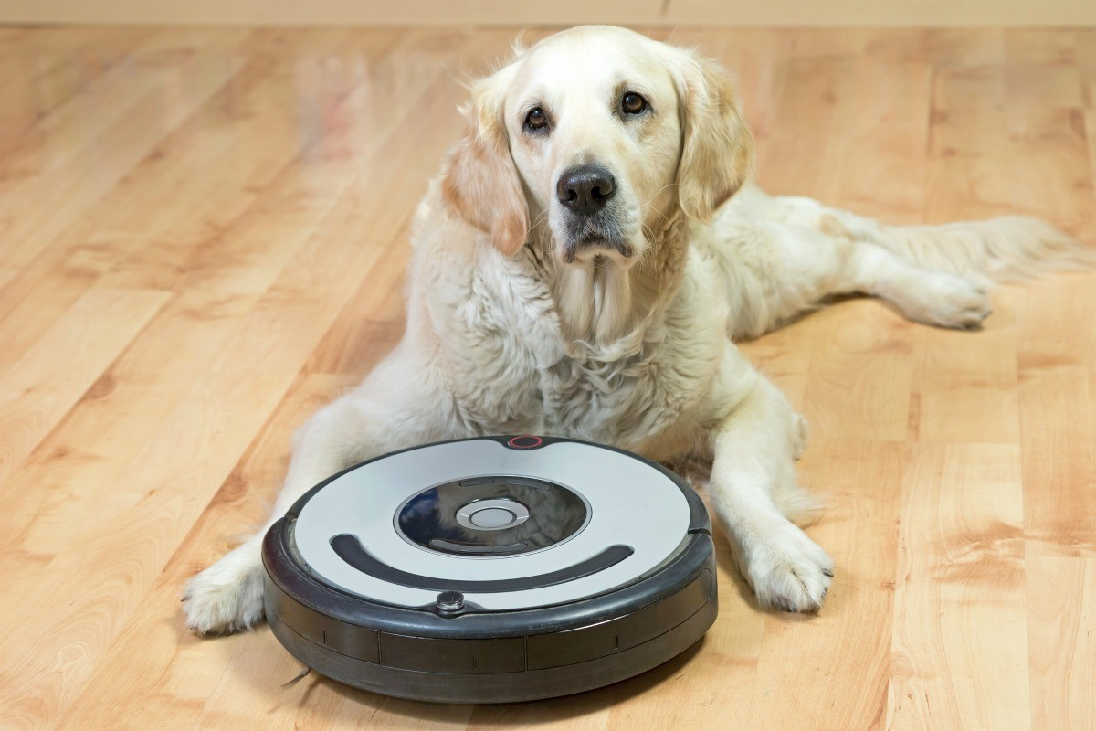 Cleaning Up Pet Hair Thriftyfun