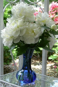 A vase of white peony blossoms.