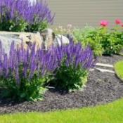 A beautiful landscape design utilizing perennial plants.