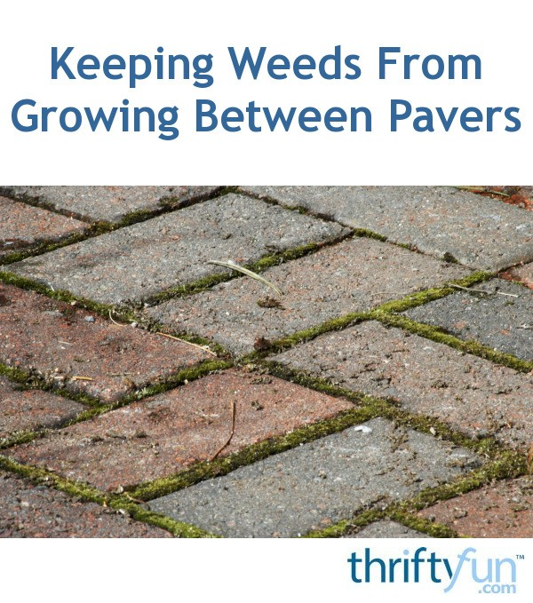 Keeping Weeds From Growing Between Pavers Thriftyfun