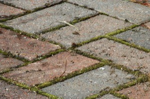 Moss and weeds growing between pavers.