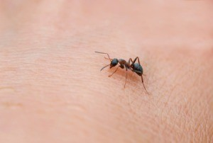 An ant crawling a person's skin.