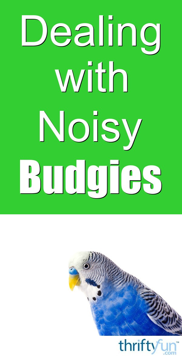 Dealing with Noisy Budgies | ThriftyFun