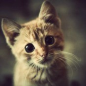 A cute kitten tilting it's head.