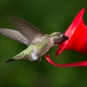 Hummingbird at a feeder.