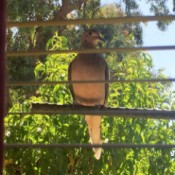 Hanging Extra Rods to Interact with Birds - bird on a rod outside the window