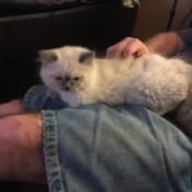 Introducing New Kitten to Resident Cats  - kitten