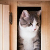 A cat in a wood cabinet.