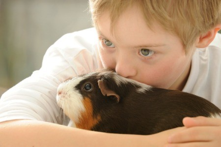 A boy cuddling with a sad guinea pig.