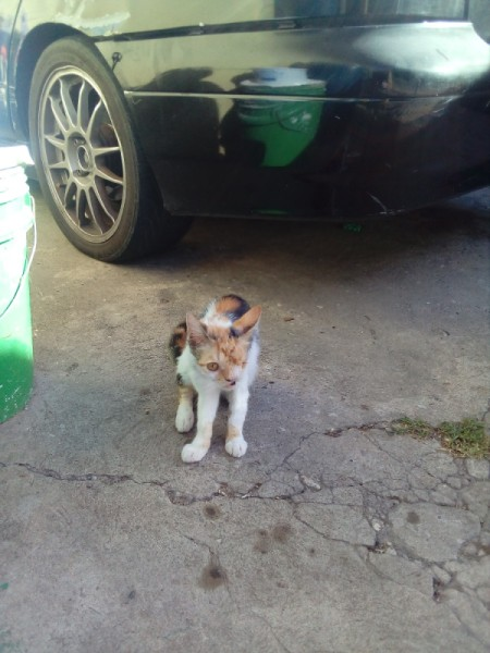 My Cat Is Losing Her Hair - calico cat