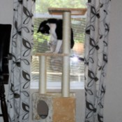 Teddy with His New Cat Tree
