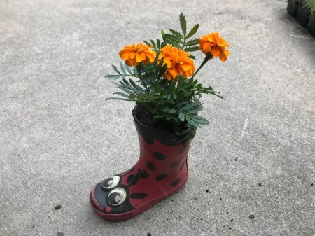 Rubber Boot Planter - add plant and more soil if needed, tamp down
