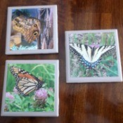 Picture Tile Coasters - butterfly tiles