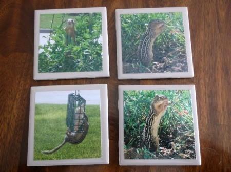 Picture Tile Coasters - chipmunk tiles
