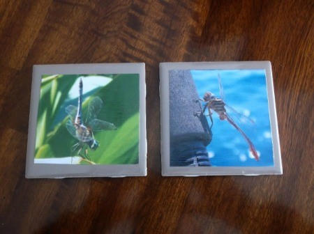 Picture Tile Coasters - dragonfly tiles