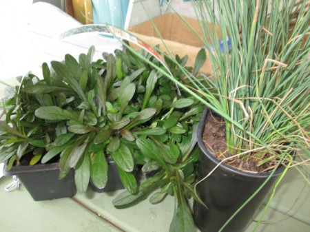 Thrift Store Garden Chair Planter - plants