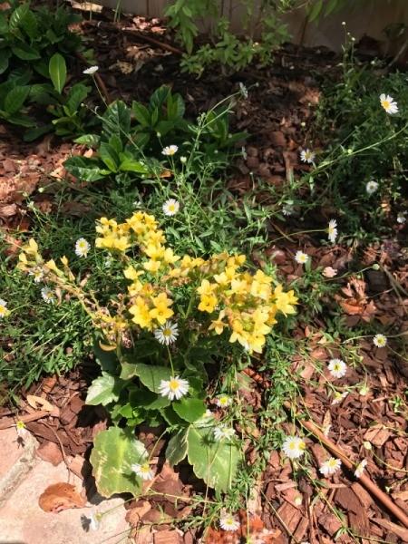 Flower Crown - mini daisies