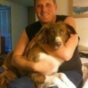 Mocha (Australian Shepherd/Cowdog) - now