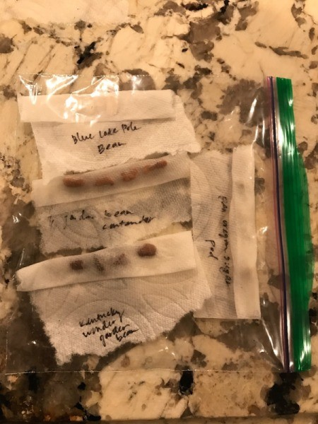Faster Seed Germination - seeds in  Ziploc bags