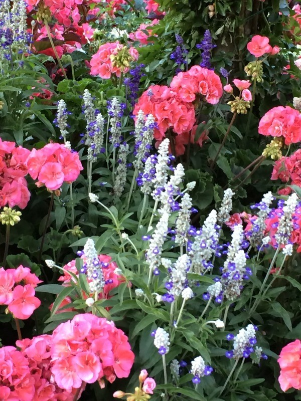 A garden bed of different blooming flowers, at Butchart Gardens.