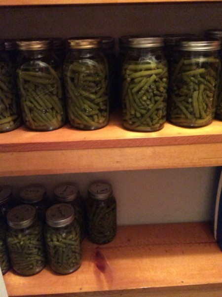 Canning jars of underprocessed green beans