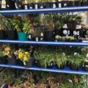 Clearance Plants - discount plant rack