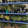 Clearance Plants - discount plant rack