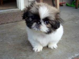RE: Advice for a Puppy With Parvo