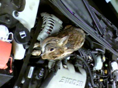 Squirrels Chewing On Car Wiring Thriftyfun