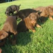 Calming Hyper Puppies