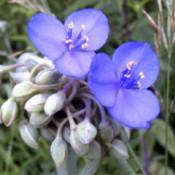 Flowers in bloom, along a walking trail.