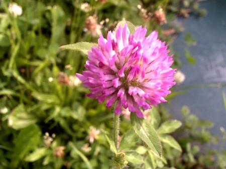 A flower in bloom, along a walking trail.