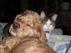 RE: Housebreaking an Abused Dog