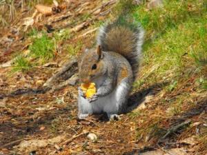RE: Wildlife: Squirrel Photos