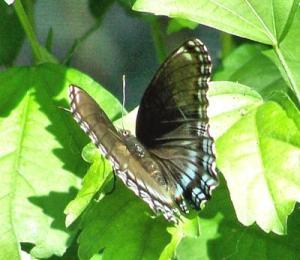 RE: Wildlife: Butterflies