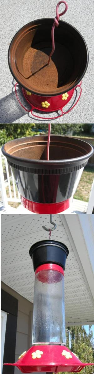 RE: A Remedy for Ants in the Hummingbird Feeder