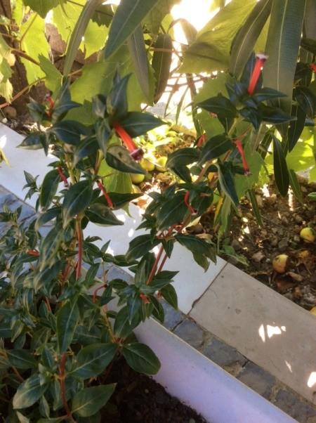 Identifying Garden Plants